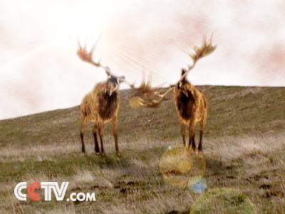世界灭绝动物碑
