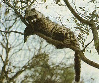 ]非洲七种神秘动物