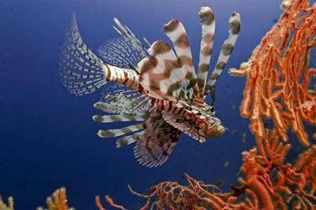 人与自然:非洲野生世界—海洋