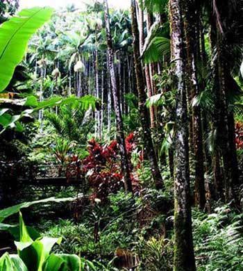 人与自然:热带雨林