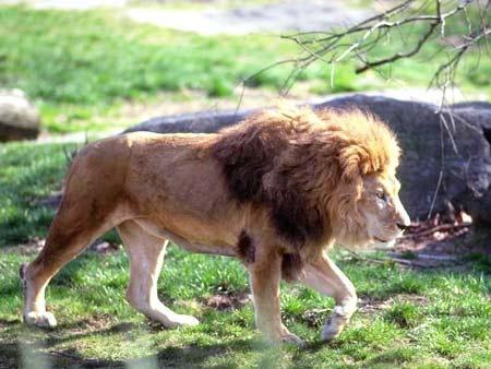 动物世界的开头曲-央视《动物世界》片头曲