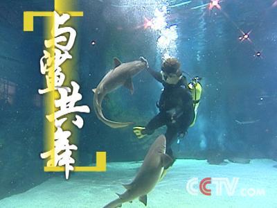 鲨鱼属于低等动物的鱼类