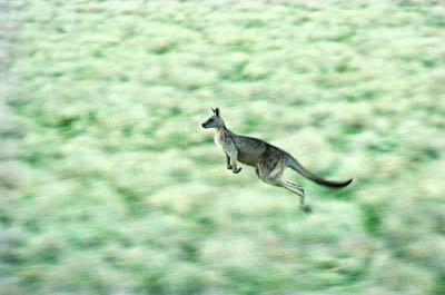 动物世界:澳大利亚,美丽的方舟