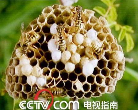 蜂窝花织法图解步骤