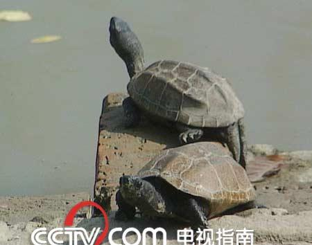 乌龟冬眠吗_青蛙冬眠吗_兔子冬眠吗