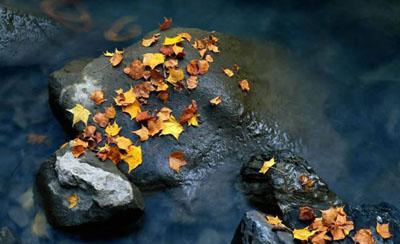 冷艳浮华之秋